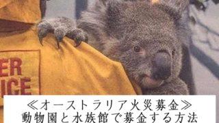 ≪オーストラリア火災募金≫動物園と水族館での現金で募金する方法&現金書留で郵送する方法