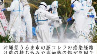 沖縄県うるま市の豚コレラの感染経路は菌の持ち込みや非加熱の餌が原因?ネットやツイッターの情報まとめ
